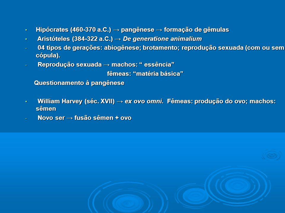 Hipócrates (460-370 a.C.) pangênese formação de gêmulas Hipócrates (460-370 a.C.) pangênese formação de gêmulas Aristóteles (384-322 a.C.) De generatione animalium Aristóteles (384-322 a.C.) De generatione animalium - 04 tipos de gerações: abiogênese; brotamento; reprodução sexuada (com ou sem cópula).