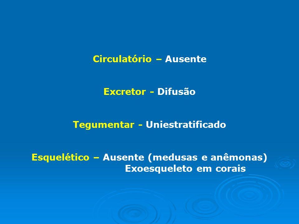 SISTEMAS Digestório – Incompleto com cavidade gastrovascular Digestão extra e intracelular Locomotor – Movimentos de expansão e contração (jatopropuls