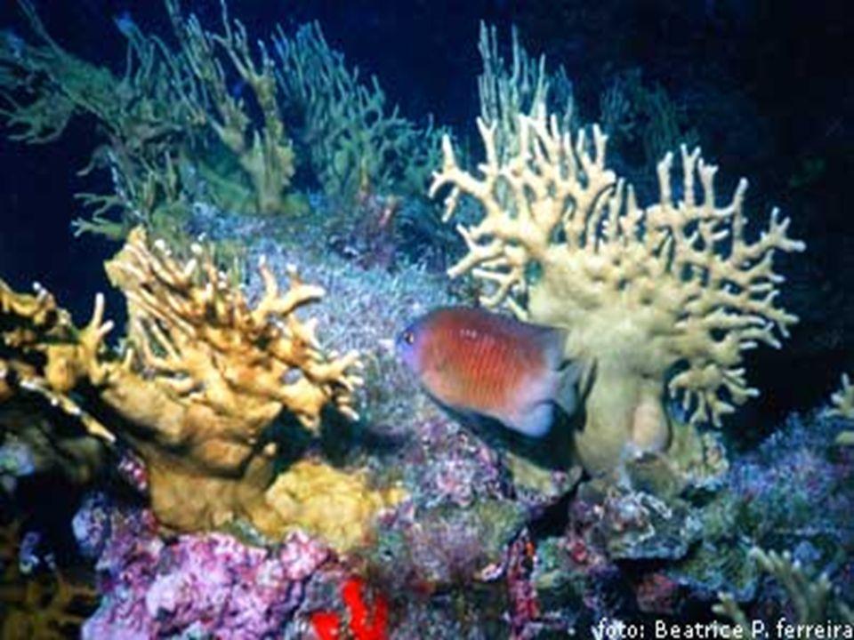 CLASSE CUBOZOA (cubozoários) marinhos; marinhos; maioria com forma medusóide; maioria com forma medusóide; Compactos e cúbicas; Compactos e cúbicas; Tentáculos situados os vértices das bordas do corpo; Tentáculos situados os vértices das bordas do corpo; cnidoblastos com toxinas poderosas.