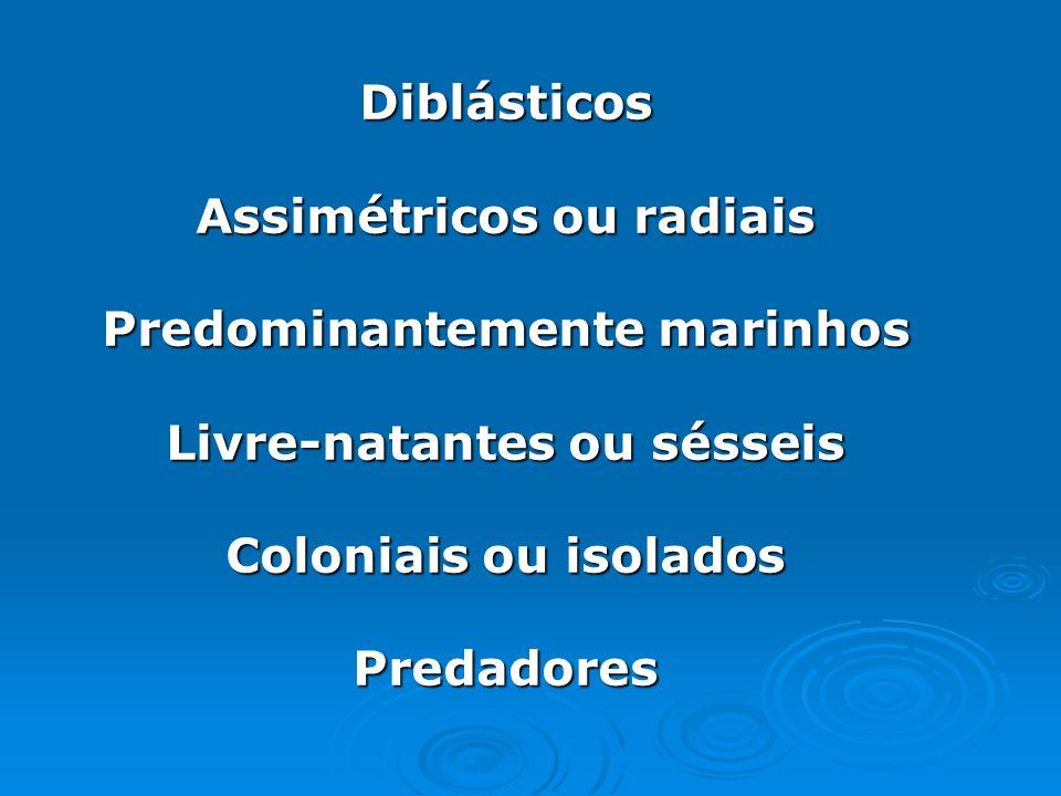 Diblásticos Assimétricos ou radiais Predominantemente marinhos Livre-natantes ou sésseis Coloniais ou isolados Predadores