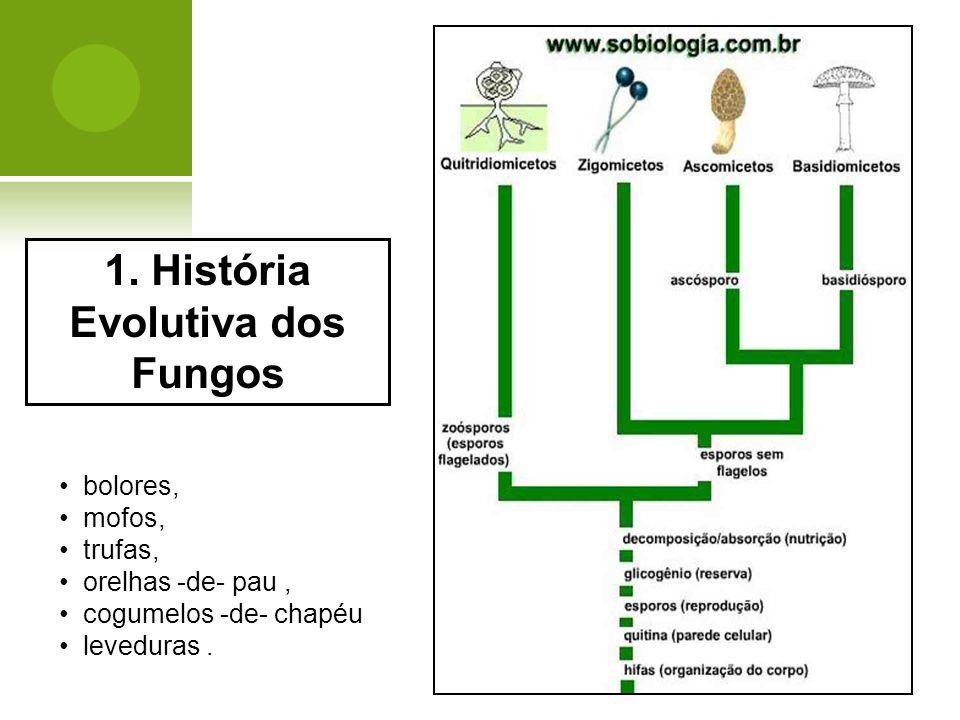 1. História Evolutiva dos Fungos bolores, mofos, trufas, orelhas -de- pau, cogumelos -de- chapéu leveduras.
