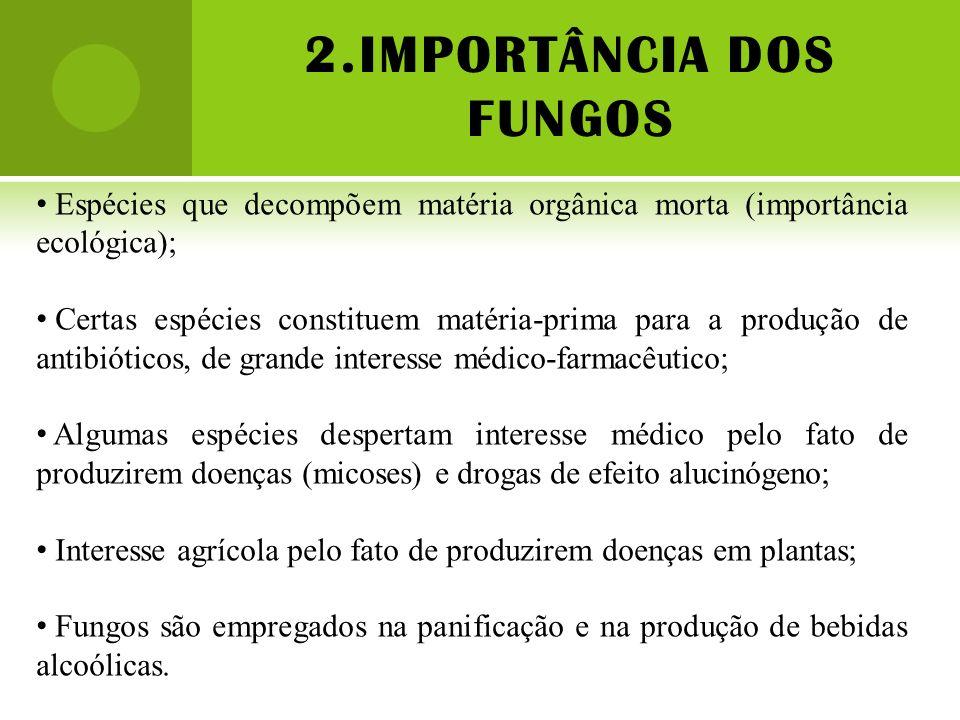 2.IMPORTÂNCIA DOS FUNGOS Espécies que decompõem matéria orgânica morta (importância ecológica); Certas espécies constituem matéria-prima para a produç