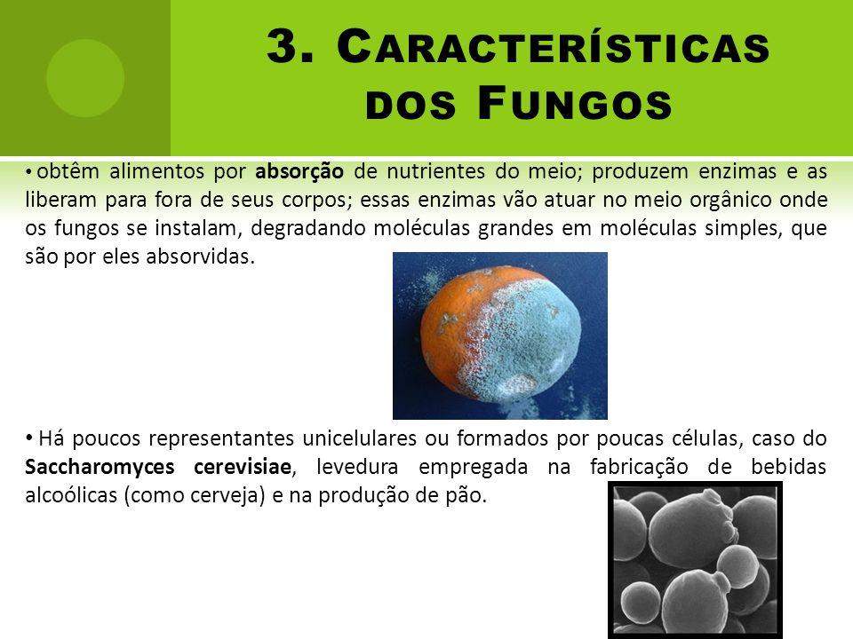 3. C ARACTERÍSTICAS DOS F UNGOS obtêm alimentos por absorção de nutrientes do meio; produzem enzimas e as liberam para fora de seus corpos; essas enzi