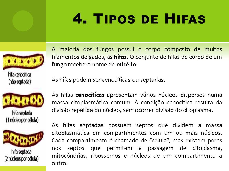 4. T IPOS DE H IFAS A maioria dos fungos possui o corpo composto de muitos filamentos delgados, as hifas. O conjunto de hifas de corpo de um fungo rec