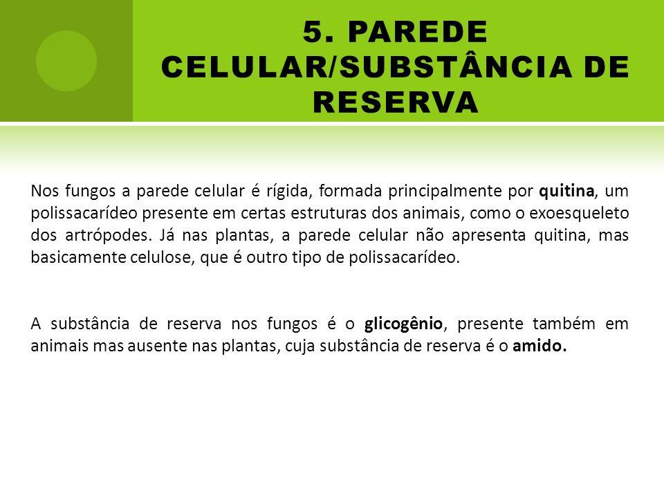 5. PAREDE CELULAR/SUBSTÂNCIA DE RESERVA Nos fungos a parede celular é rígida, formada principalmente por quitina, um polissacarídeo presente em certas