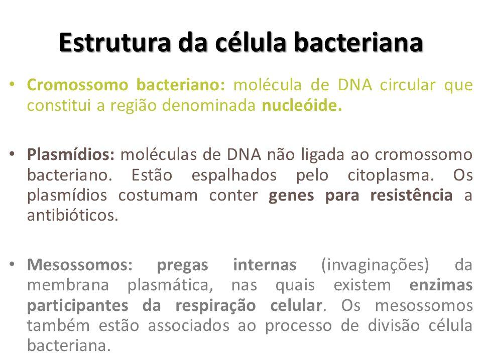 Estrutura da célula bacteriana Cromossomo bacteriano: molécula de DNA circular que constitui a região denominada nucleóide. Plasmídios: moléculas de D