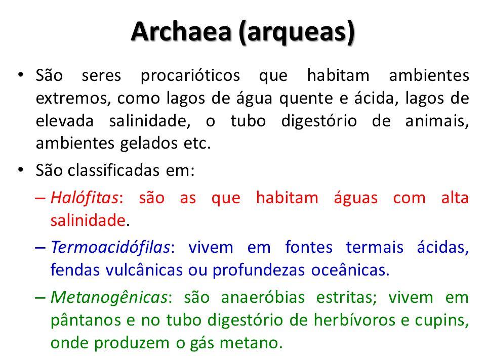 Archaea (arqueas) São seres procarióticos que habitam ambientes extremos, como lagos de água quente e ácida, lagos de elevada salinidade, o tubo diges