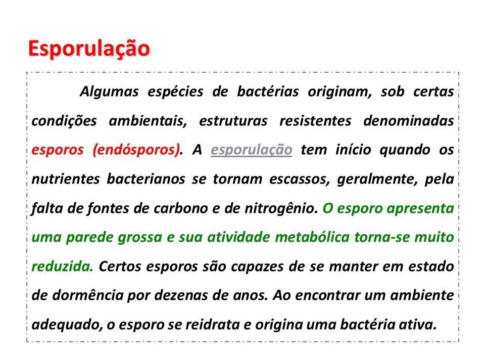 Esporulação Algumas espécies de bactérias originam, sob certas condições ambientais, estruturas resistentes denominadas esporos (endósporos). A esporu