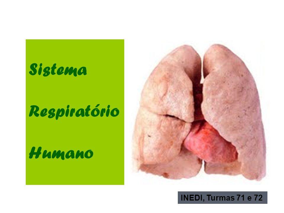 Sistema Respiratório Humano INEDI, Turmas 71 e 72