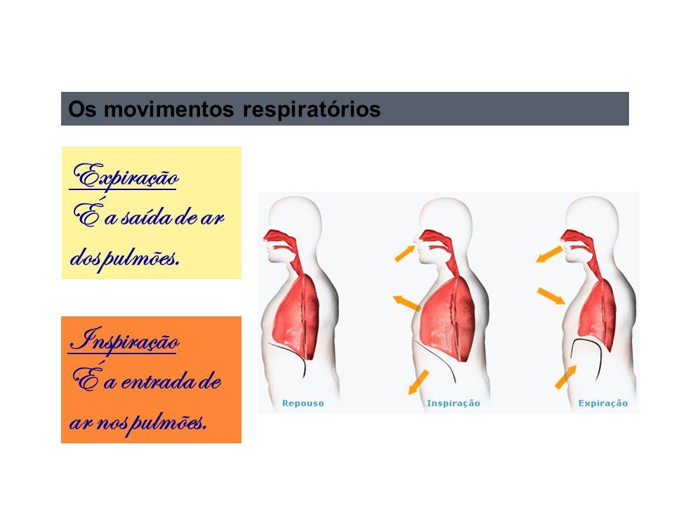 Os movimentos respiratórios Inspiração É a entrada de ar nos pulmões.
