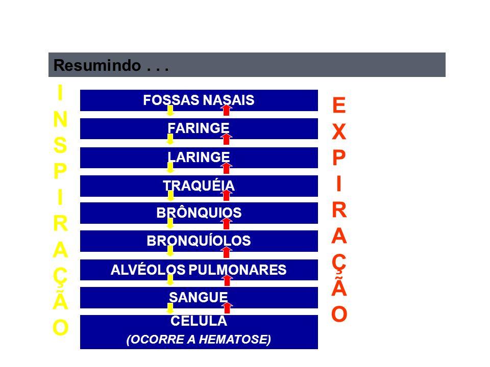 FOSSAS NASAIS FARINGE LARINGE TRAQUÉIA BRÔNQUIOS BRONQUÍOLOS ALVÉOLOS PULMONARES SANGUE CÉLULA (OCORRE A HEMATOSE) INSPIRAÇÃOINSPIRAÇÃO EXPIRAÇÃOEXPIRAÇÃO Resumindo...