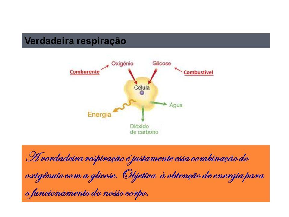 Verdadeira respiração A verdadeira respiração é justamente essa combinação do oxigênuio com a glicose.