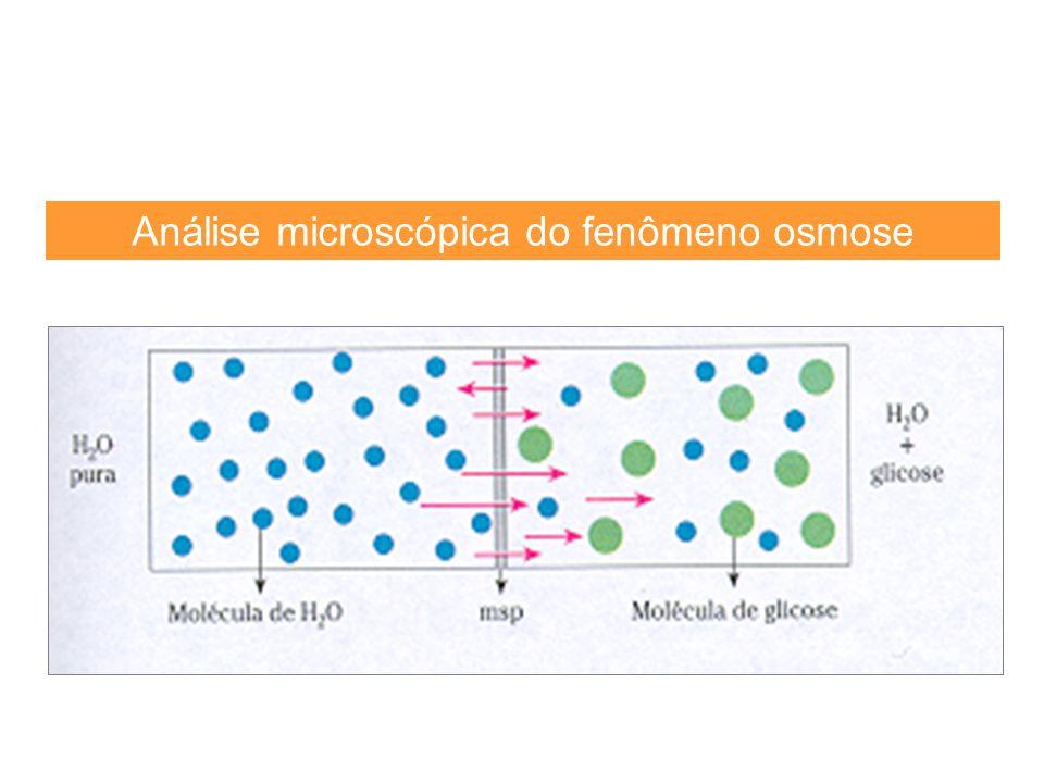 Análise microscópica do fenômeno osmose