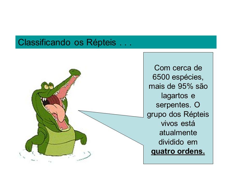 Classificando os Répteis... Com cerca de 6500 espécies, mais de 95% são lagartos e serpentes. O grupo dos Répteis vivos está atualmente dividido em qu