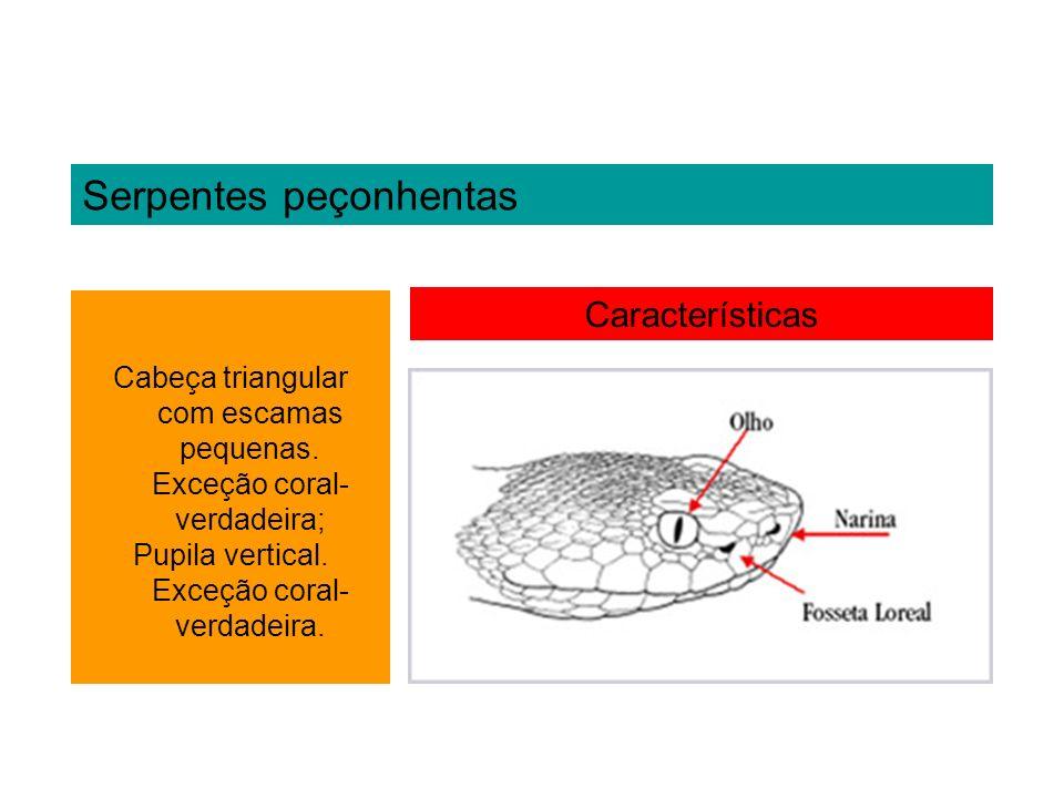 Serpentes peçonhentas Características Cabeça triangular com escamas pequenas. Exceção coral- verdadeira; Pupila vertical. Exceção coral- verdadeira.