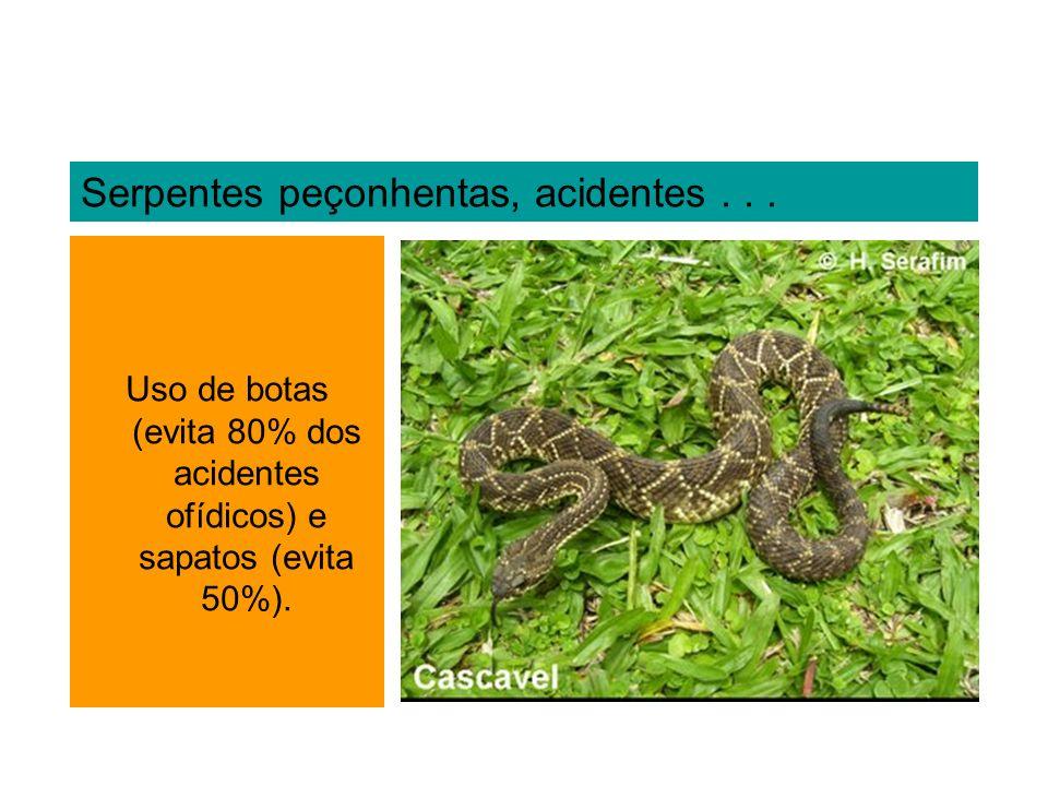 Serpentes peçonhentas, acidentes... Uso de botas (evita 80% dos acidentes ofídicos) e sapatos (evita 50%).