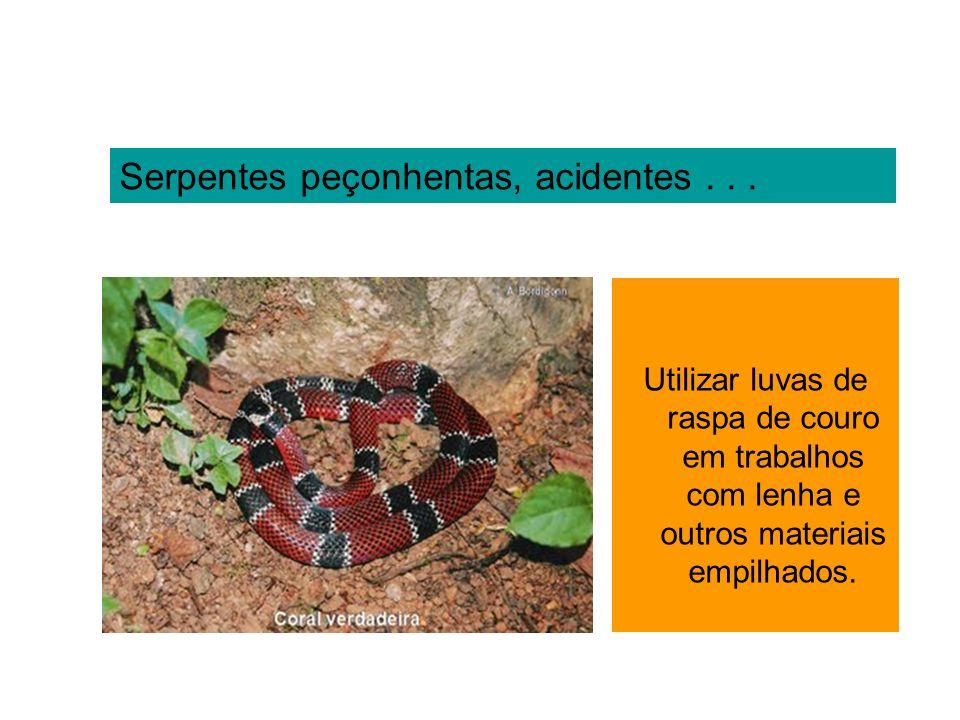 Serpentes peçonhentas, acidentes... Utilizar luvas de raspa de couro em trabalhos com lenha e outros materiais empilhados.
