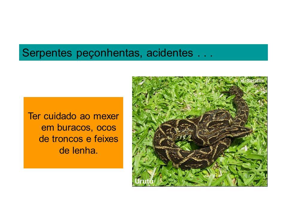 Serpentes peçonhentas, acidentes... Ter cuidado ao mexer em buracos, ocos de troncos e feixes de lenha.