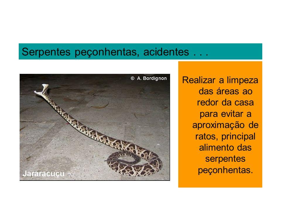 Serpentes peçonhentas, acidentes... Realizar a limpeza das áreas ao redor da casa para evitar a aproximação de ratos, principal alimento das serpentes