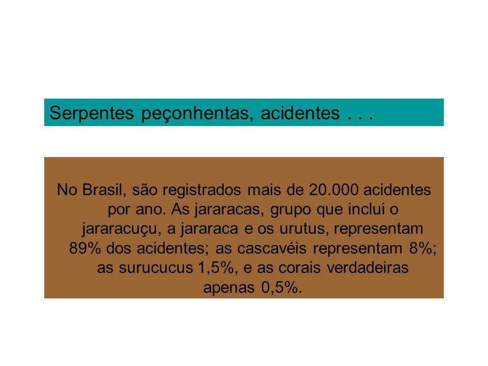Serpentes peçonhentas, acidentes... No Brasil, são registrados mais de 20.000 acidentes por ano. As jararacas, grupo que inclui o jararacuçu, a jarara