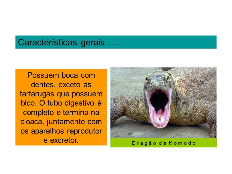 Serpentes peçonhentas, acidentes...No Brasil, são registrados mais de 20.000 acidentes por ano.