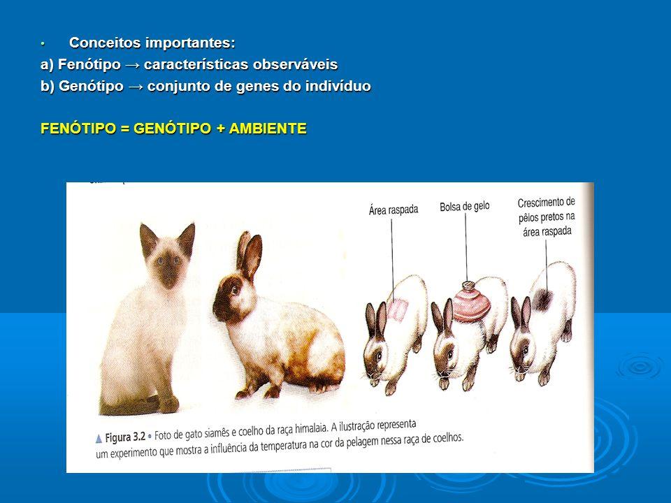 Conceitos importantes: Conceitos importantes: a) Fenótipo características observáveis b) Genótipo conjunto de genes do indivíduo FENÓTIPO = GENÓTIPO + AMBIENTE