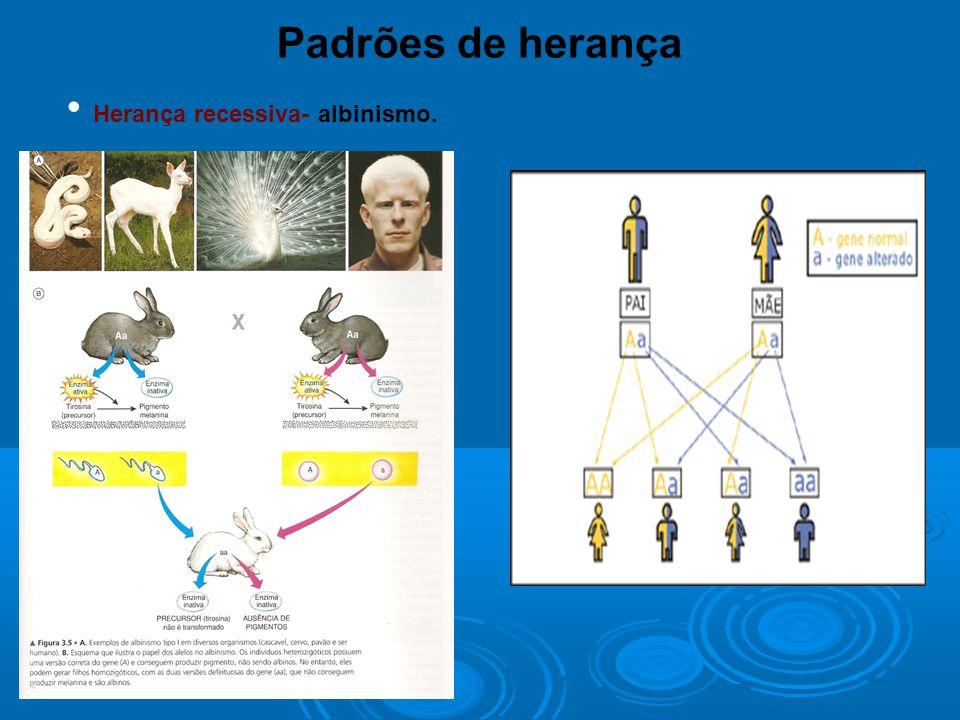 Padrões de herança Herança recessiva- albinismo.