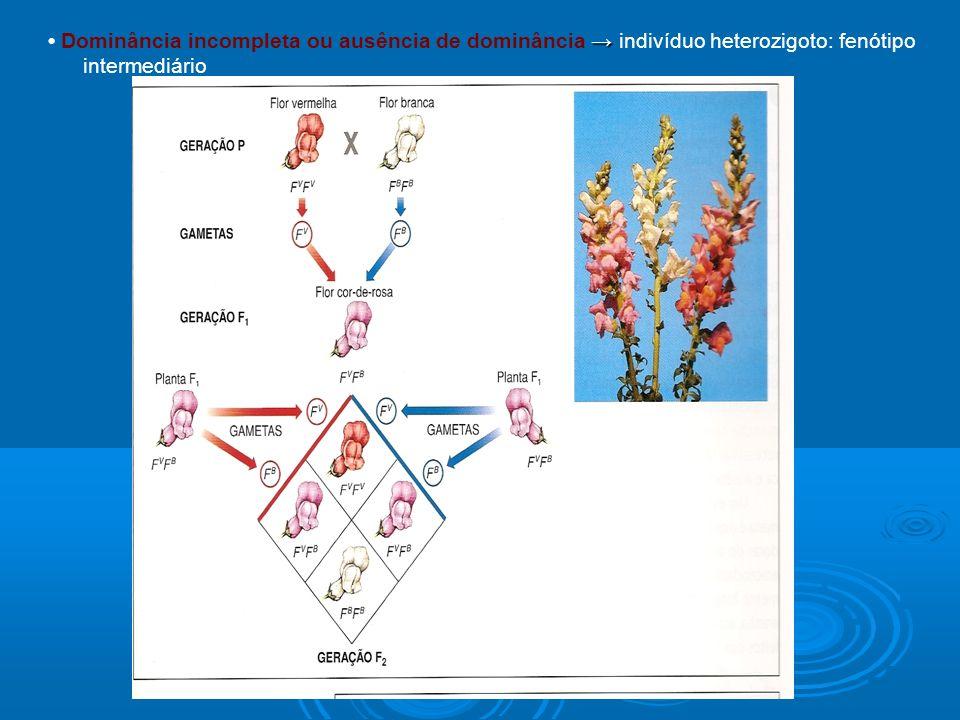 Dominância incompleta ou ausência de dominância indivíduo heterozigoto: fenótipo intermediário