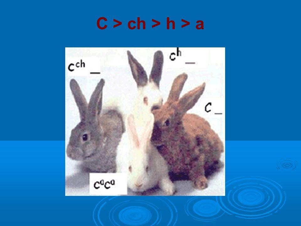 C > ch > h > a