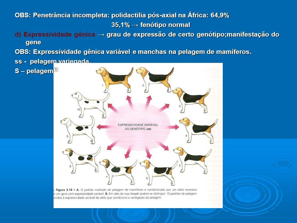 OBS: Penetrância incompleta: polidactilia pós-axial na África: 64,9% 35,1% fenótipo normal 35,1% fenótipo normal grau de expressão de certo genótipo;manifestação do gene d) Expressividade gênica grau de expressão de certo genótipo;manifestação do gene OBS: Expressividade gênica variável e manchas na pelagem de mamíferos.