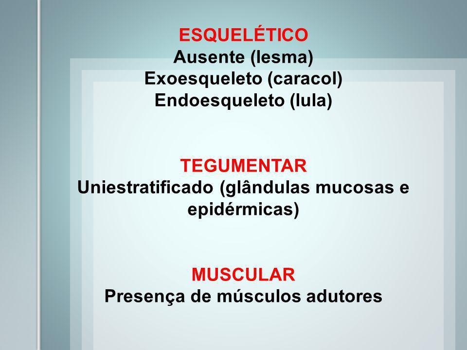 RESPIRATÓRIO Cutânea Branquial Pulmonar NERVOSO Ganglionar (cerebrais, pedais e viscerais) Órgãos sensitivos com olhos e tentáculos CIRCULATÓRIO Abert
