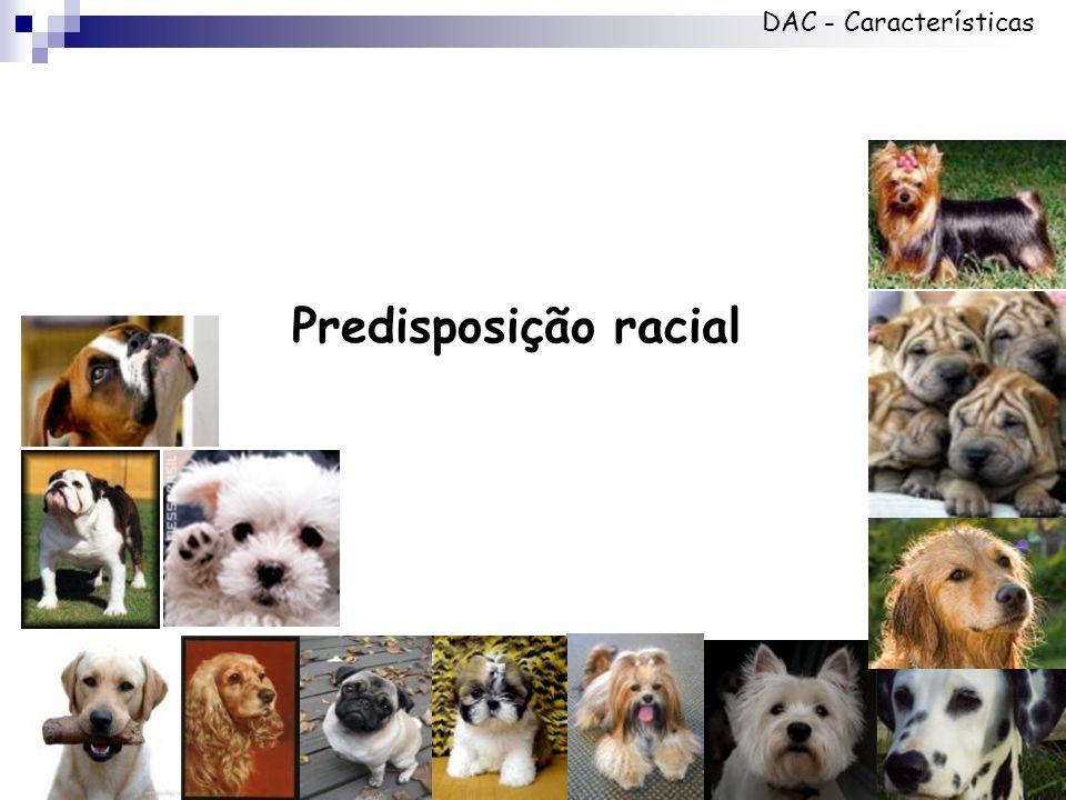 Predisposição racial DAC - Características