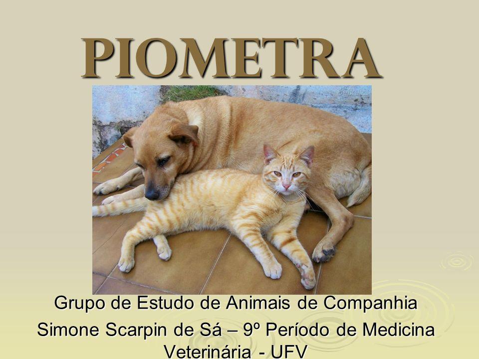 Piometra Grupo de Estudo de Animais de Companhia Simone Scarpin de Sá – 9º Período de Medicina Veterinária - UFV