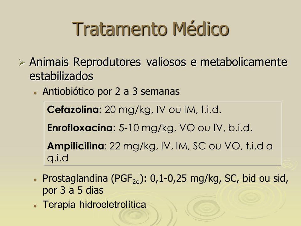 Tratamento Médico Animais Reprodutores valiosos e metabolicamente estabilizados Animais Reprodutores valiosos e metabolicamente estabilizados Antiobiótico por 2 a 3 semanas Prostaglandina (PGF 2α ): 0,1-0,25 mg/kg, SC, bid ou sid, por 3 a 5 dias Terapia hidroeletrolítica Cefazolina: 20 mg/kg, IV ou IM, t.i.d.