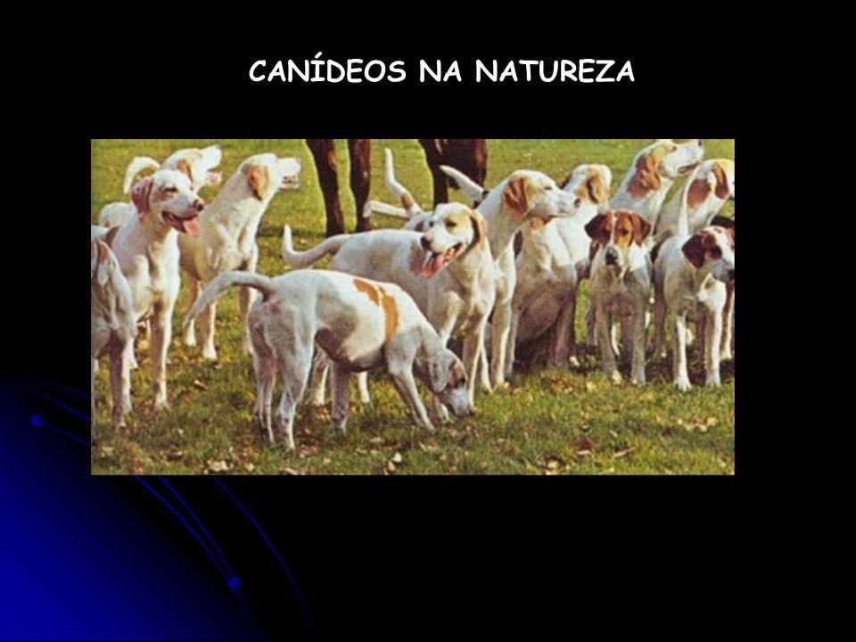 CANÍDEOS NA NATUREZA