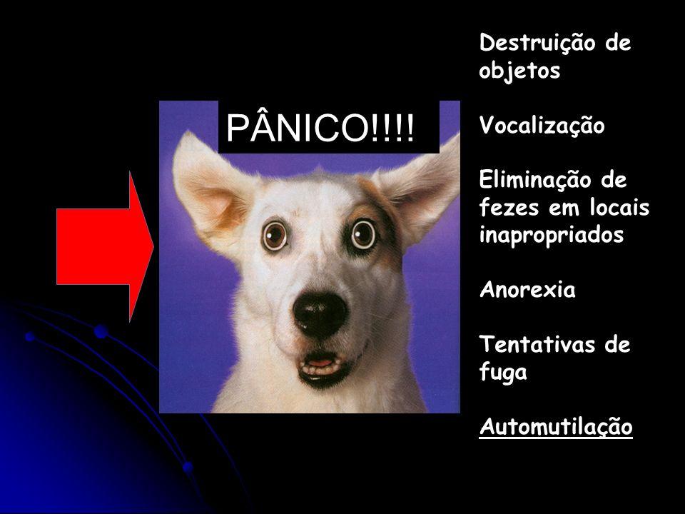 PÂNICO!!!! Destruição de objetos Vocalização Eliminação de fezes em locais inapropriados Anorexia Tentativas de fuga Automutilação