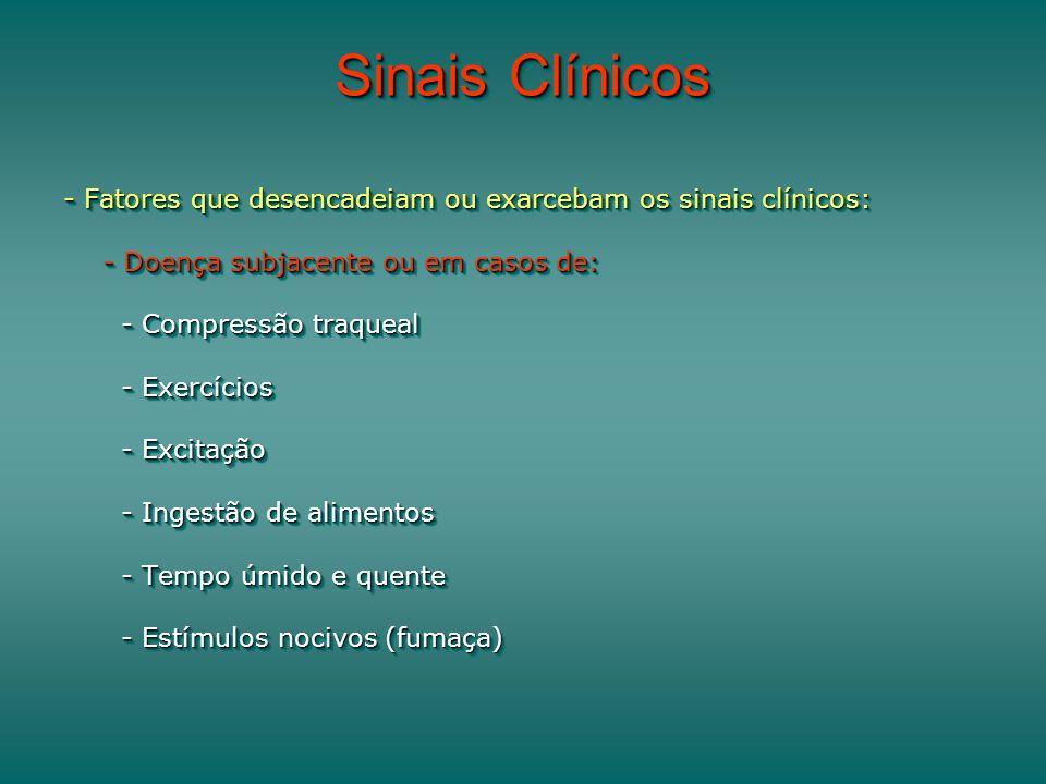 Sinais Clínicos - Fatores que desencadeiam ou exarcebam os sinais clínicos: - Doença subjacente ou em casos de: - Compressão traqueal - Compressão traqueal - Exercícios - Exercícios - Excitação - Excitação - Ingestão de alimentos - Ingestão de alimentos - Tempo úmido e quente - Tempo úmido e quente - Estímulos nocivos (fumaça) - Estímulos nocivos (fumaça) - Fatores que desencadeiam ou exarcebam os sinais clínicos: - Doença subjacente ou em casos de: - Compressão traqueal - Compressão traqueal - Exercícios - Exercícios - Excitação - Excitação - Ingestão de alimentos - Ingestão de alimentos - Tempo úmido e quente - Tempo úmido e quente - Estímulos nocivos (fumaça) - Estímulos nocivos (fumaça)