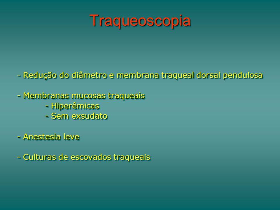 TraqueoscopiaTraqueoscopia - Redução do diâmetro e membrana traqueal dorsal pendulosa - Membranas mucosas traqueais - Hiperêmicas - Sem exsudato - Ane