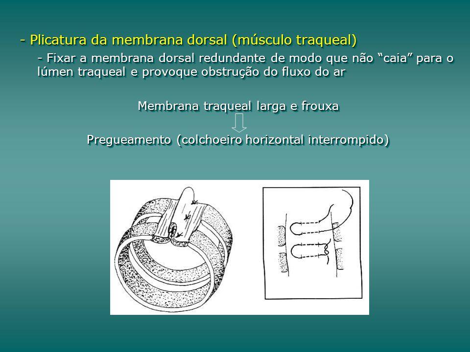 - Plicatura da membrana dorsal (músculo traqueal) - Fixar a membrana dorsal redundante de modo que não caia para o lúmen traqueal e provoque obstrução do fluxo do ar Membrana traqueal larga e frouxa Pregueamento (colchoeiro horizontal interrompido) - Plicatura da membrana dorsal (músculo traqueal) - Fixar a membrana dorsal redundante de modo que não caia para o lúmen traqueal e provoque obstrução do fluxo do ar Membrana traqueal larga e frouxa Pregueamento (colchoeiro horizontal interrompido)