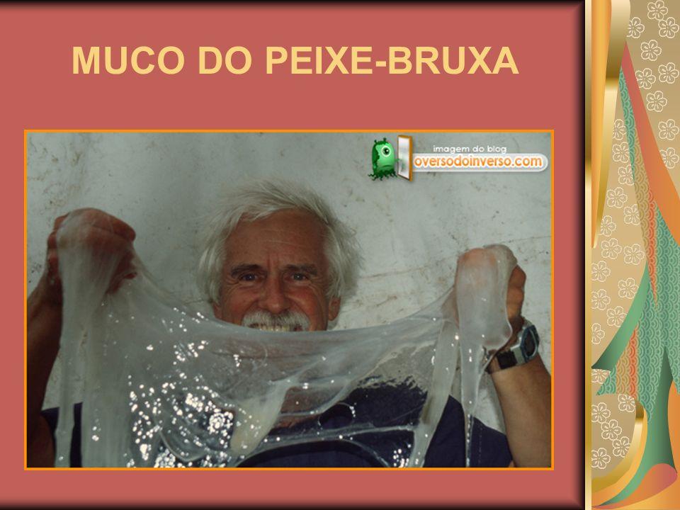 MUCO DO PEIXE-BRUXA