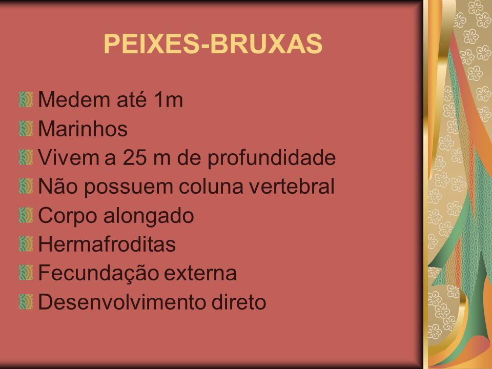 PEIXES-BRUXAS Medem até 1m Marinhos Vivem a 25 m de profundidade Não possuem coluna vertebral Corpo alongado Hermafroditas Fecundação externa Desenvol