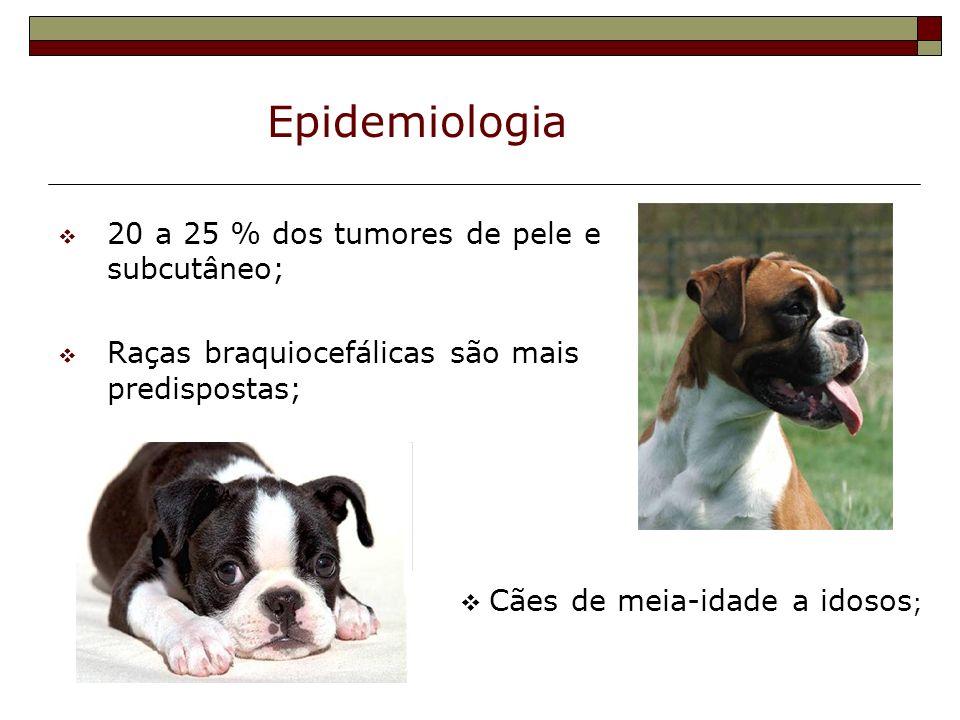 Epidemiologia 20 a 25 % dos tumores de pele e subcutâneo; Raças braquiocefálicas são mais predispostas; Cães de meia-idade a idosos ;