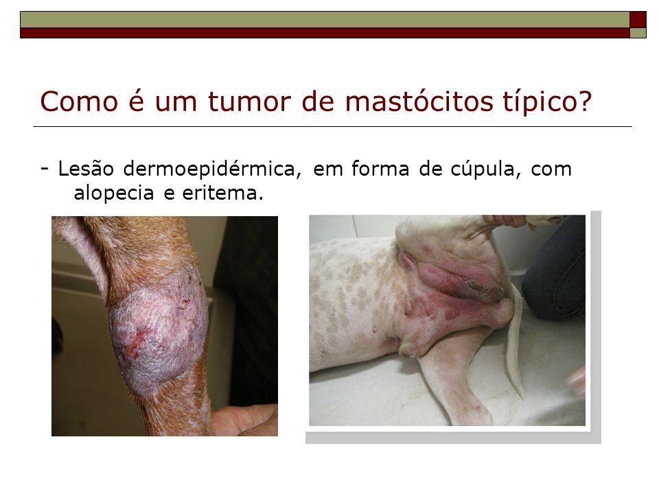 Como é um tumor de mastócitos típico? - Lesão dermoepidérmica, em forma de cúpula, com alopecia e eritema.