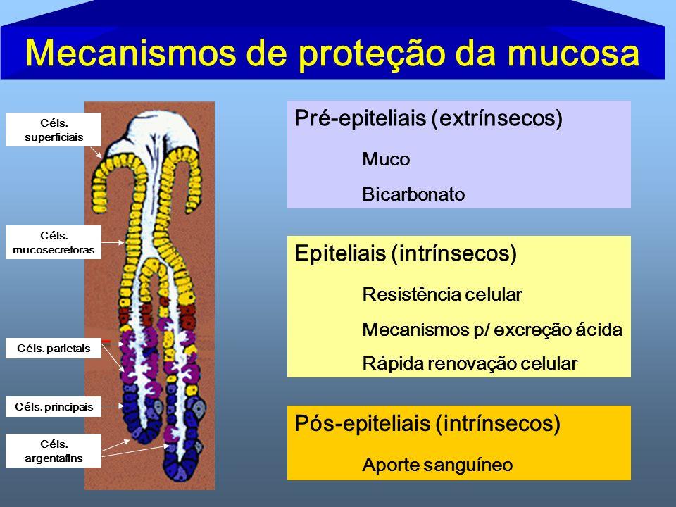 Pré-epiteliais (extrínsecos) Muco Bicarbonato Epiteliais (intrínsecos) Resistência celular Mecanismos p/ excreção ácida Rápida renovação celular Pós-e