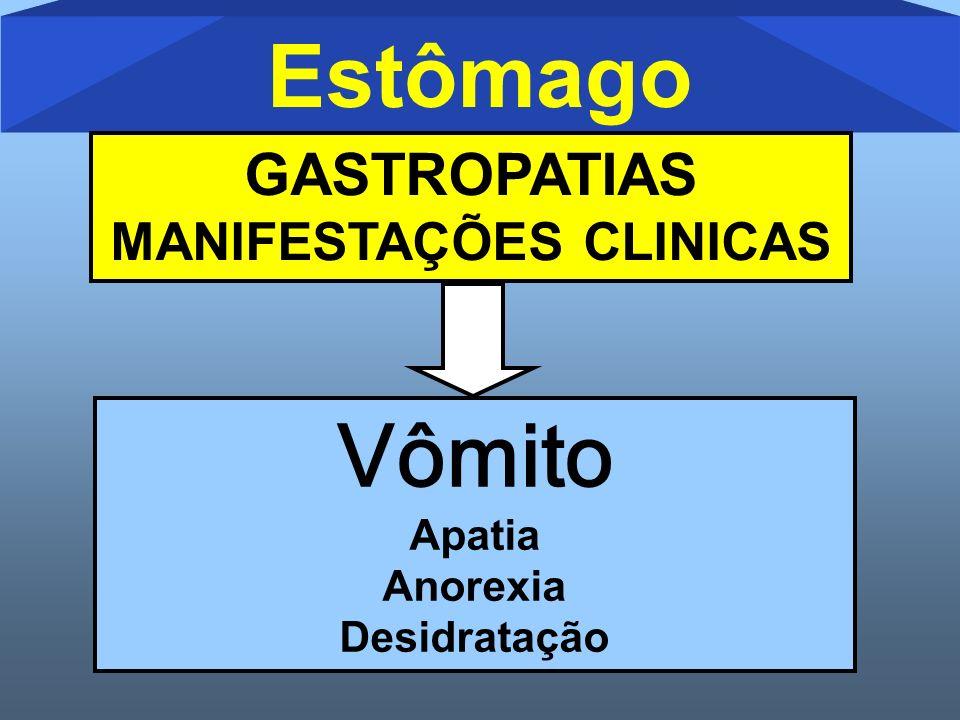 Vômito Apatia Anorexia Desidratação Estômago GASTROPATIAS MANIFESTAÇÕES CLINICAS