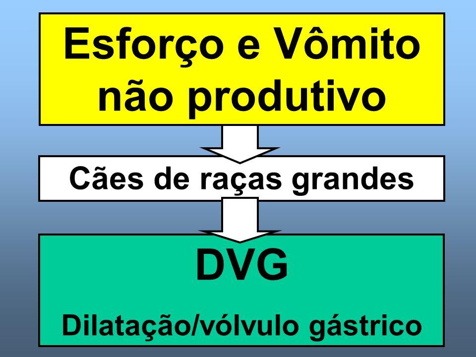 Cães de raças grandes DVG Dilatação/vólvulo gástrico Esforço e Vômito não produtivo