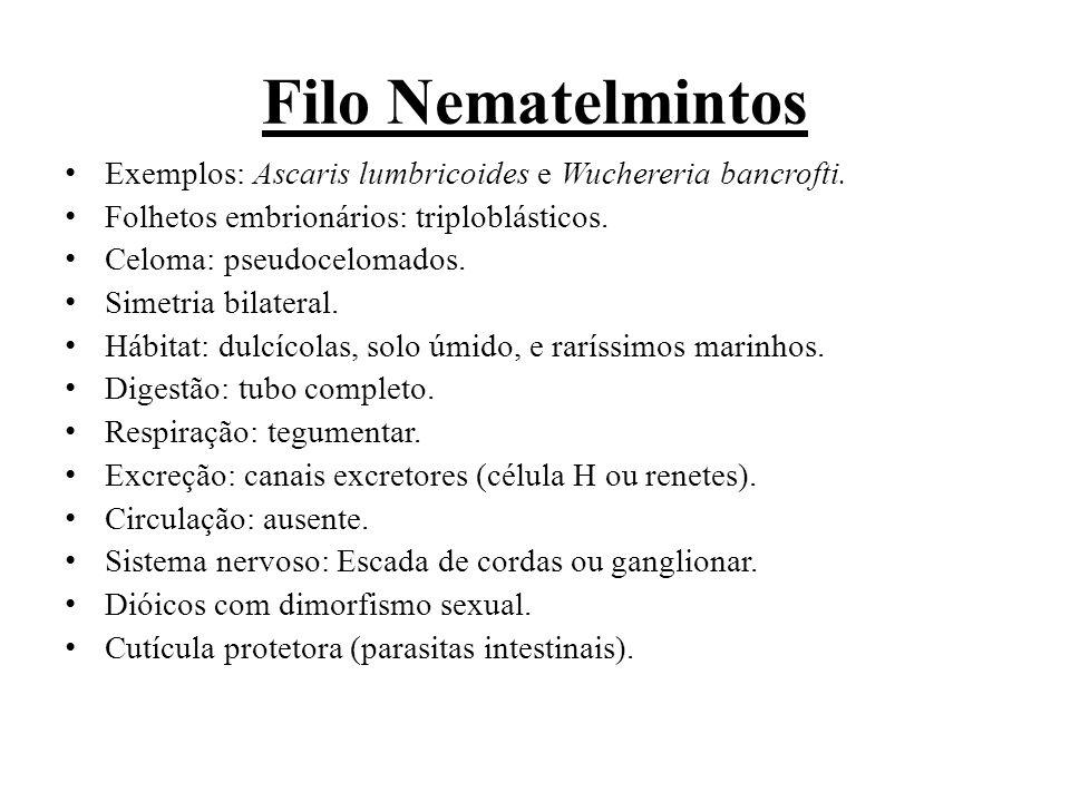 Filo Nematelmintos Exemplos: Ascaris lumbricoides e Wuchereria bancrofti.