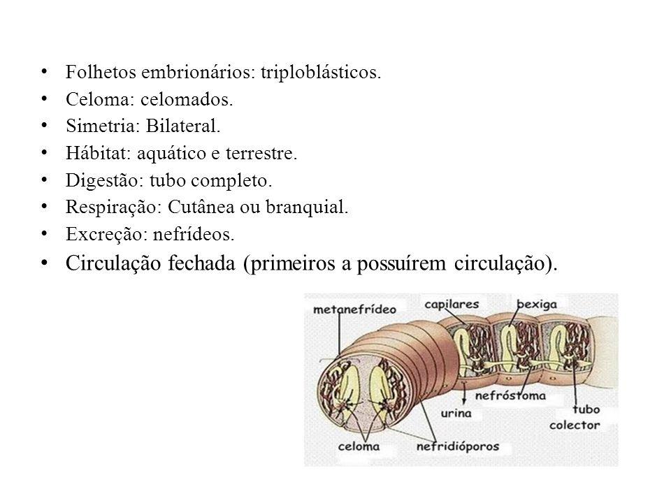 Folhetos embrionários: triploblásticos.Celoma: celomados.