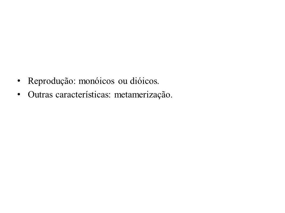 Reprodução: monóicos ou dióicos. Outras características: metamerização.