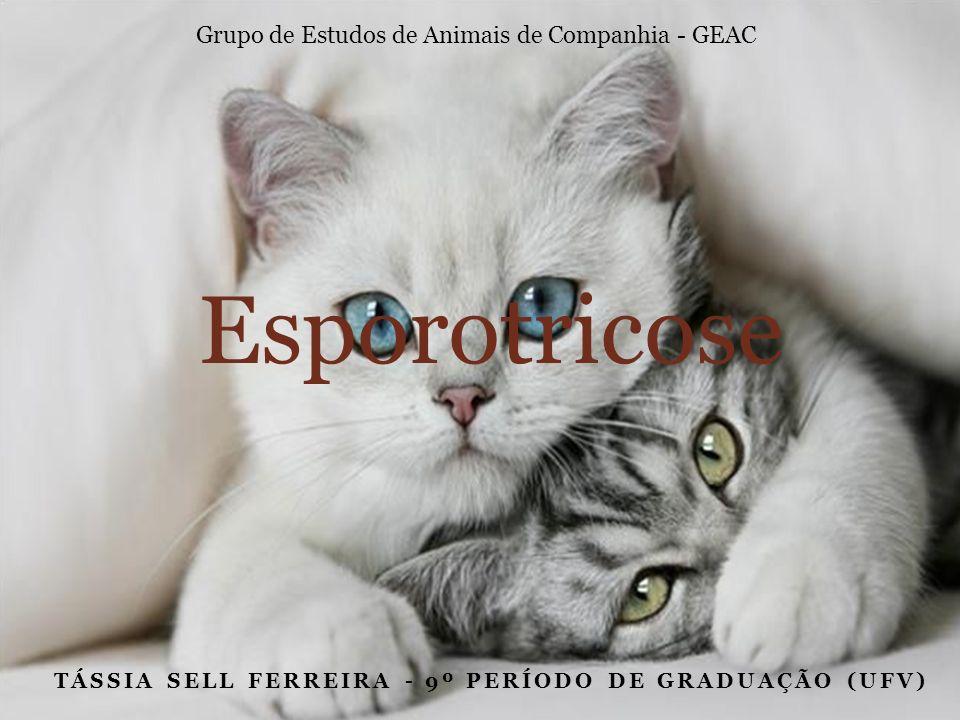 TÁSSIA SELL FERREIRA - 9º PERÍODO DE GRADUAÇÃO (UFV) Esporotricose Grupo de Estudos de Animais de Companhia - GEAC